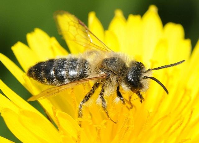 Kviz: Pčele